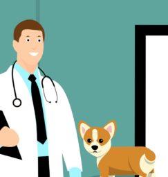 Ας μιλήσουμε για την κτηνιατρική διαμεσολάβηση
