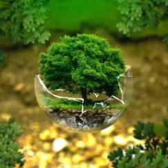 Παγκόσμια ημέρα του περιβάλλοντος & διαμεσολάβηση